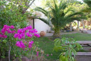 חצר רותם כפרי (2)